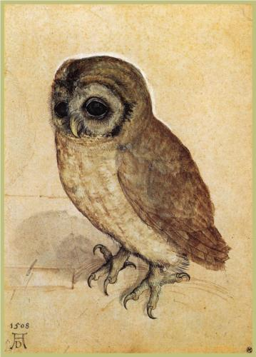 The Little Owl, A. Durer